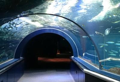 マリンピア日本海日本海大水槽トンネル
