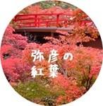 00135_original紅葉