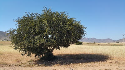 morocco-827830_19201